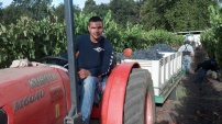 Tractor Work
