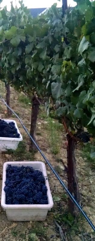 leepin harvest2014