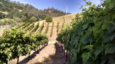 Farmed by Solorio Vineyard Management